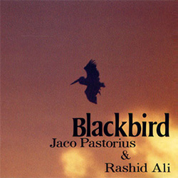 cd_blackbird