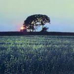 【2019年7月24日発売予定】ジャコ・パストリアス参加、パット・メセニーのファーストアルバム『Bright Size Life』がUHQCDで再発