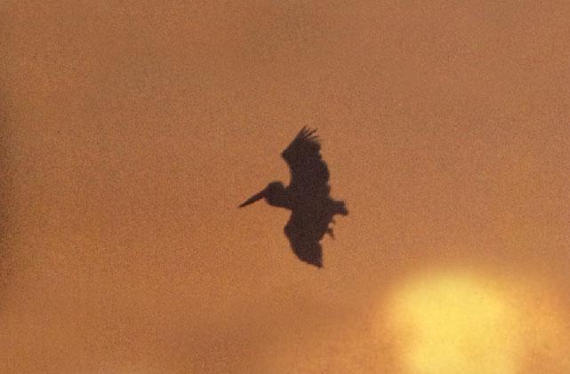 ジャコ・パストリアス~ラシッド・アリ『Blackbird(1991年)』